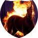 Fiery horse live wallpaper