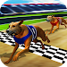 Wild Greyhound Dog Racing
